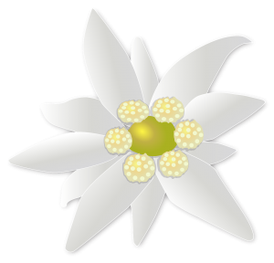 blossom-1177161_1280